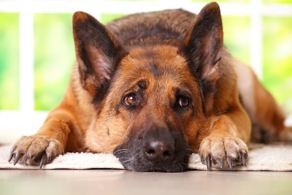 1d01e0e0798f 8 λάθη που κάνουν οι ιδιοκτήτες σκύλων