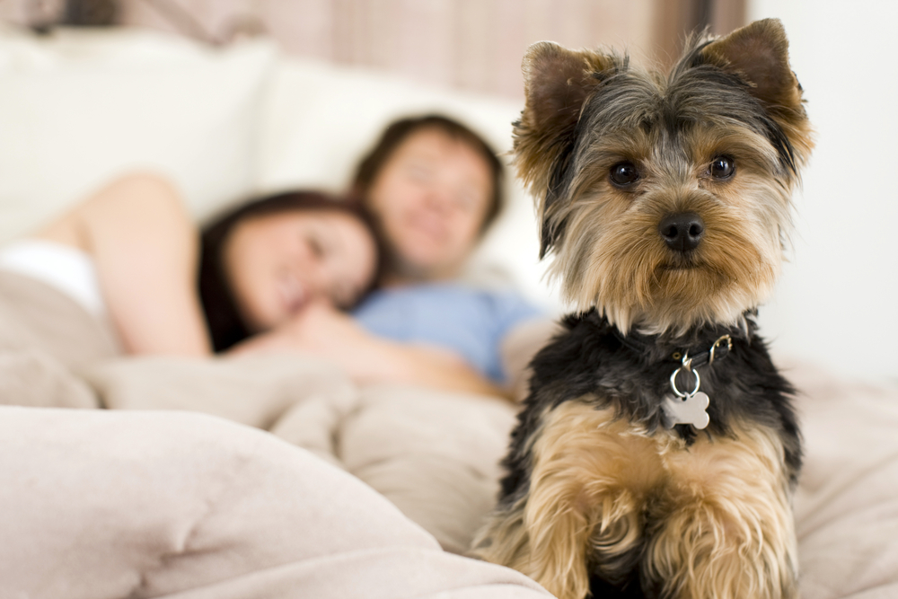 Rapamycin Extending Dog S Life